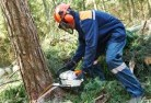 Canunda Tree felling services 21
