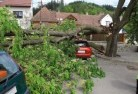 Canunda Tree felling services 41