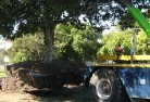 Canunda Tree felling services 4